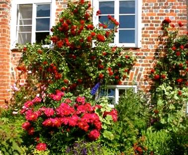 © Gutshaus Ludorf. Die Rosen in voller Pracht. 2o17
